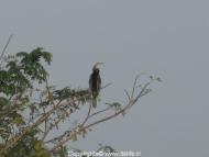 travel-khkere-snake-bird.jpg
