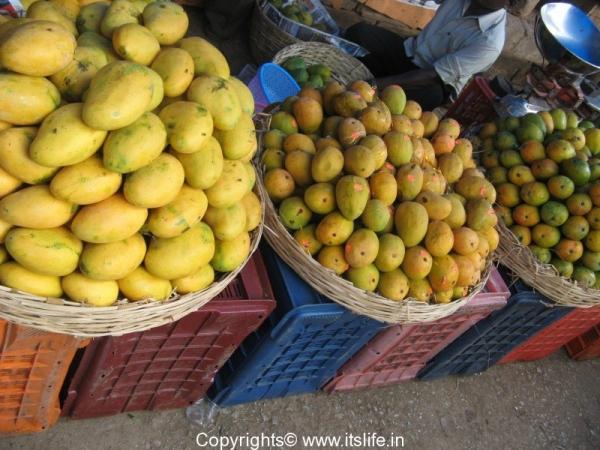 lp-mango-season-1