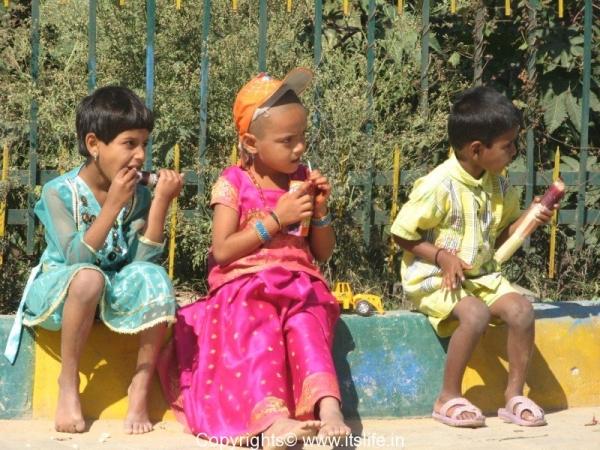 Juicy Sugarcane during Shankranthi