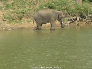 K.Gudi Tame Elephant