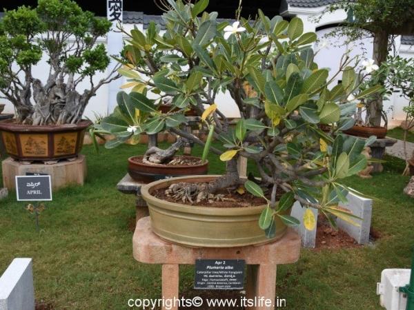 Bonsai Garden Mysore