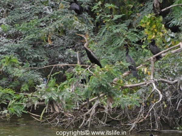 Shetty Kere - Mysore
