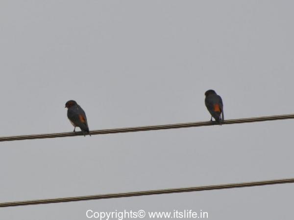 travel-birding-at-valley-school