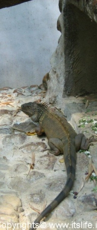 Bannerghatta - Zoo