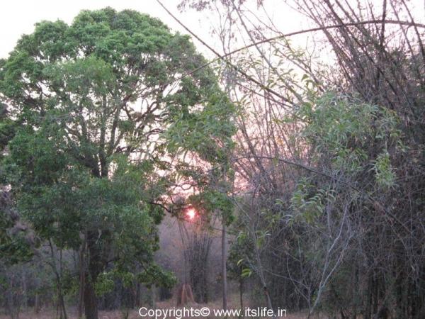 Mini Forest J.P.Nagar