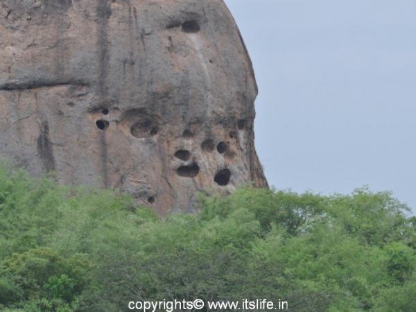 Ramadevara Betta - Vulture Sanctuary
