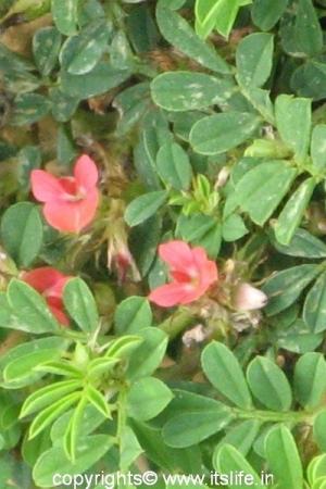 Markonahalli Dam - Wild flowers