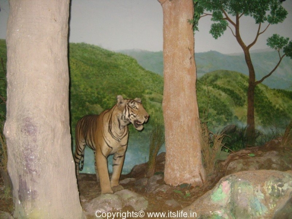 Regional Museum of Natural History, Mysore