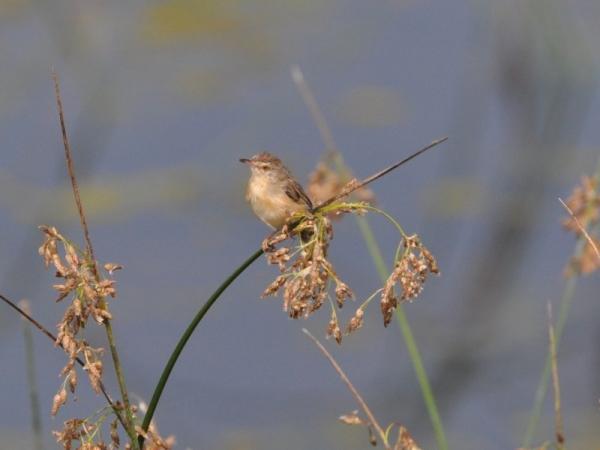Flower Pecker