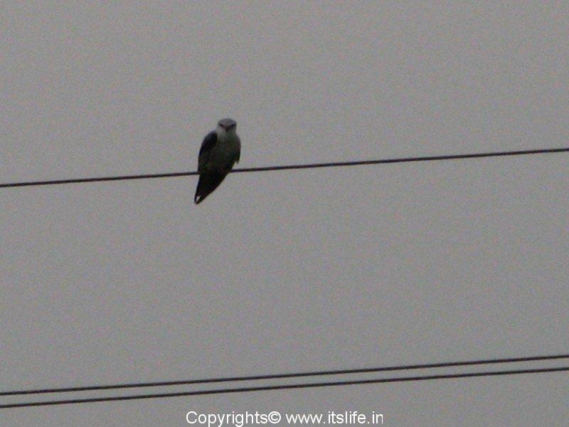 Birding in KR Nagar, Chunchanakatte and Hosa Agrahara