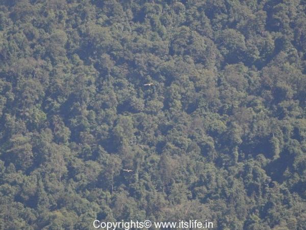Sharavathi Wildlife Sanctuary