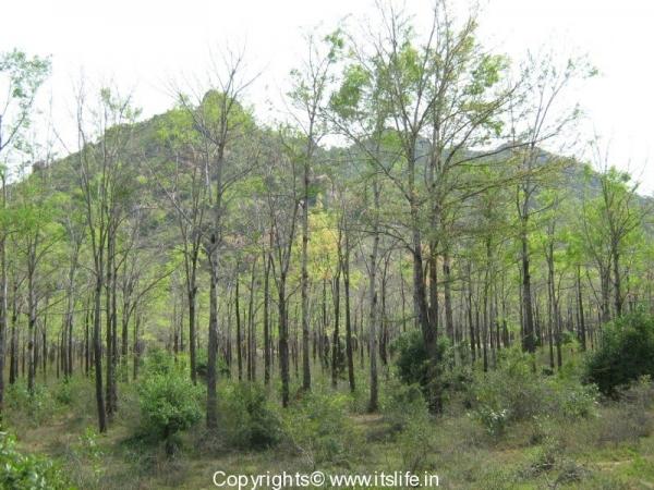 travel-annamalai-hills-1