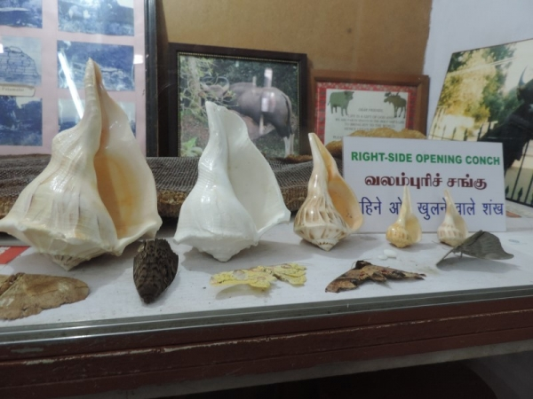 Valampuri conch
