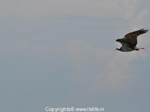 travel-birds-of-marvanthe-10