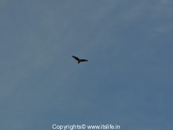 travel-birds-of-marvanthe-11