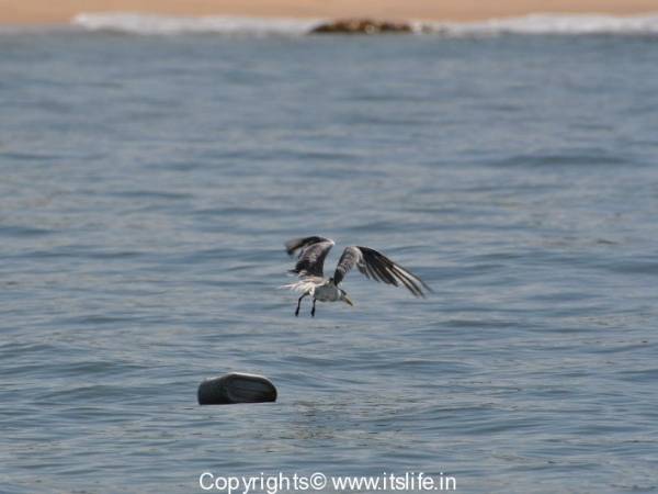 travel-birds-of-marvanthe-13