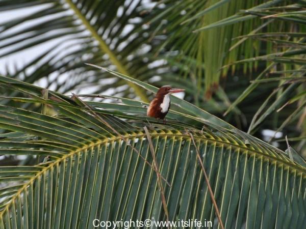 travel-birds-of-marvanthe-15