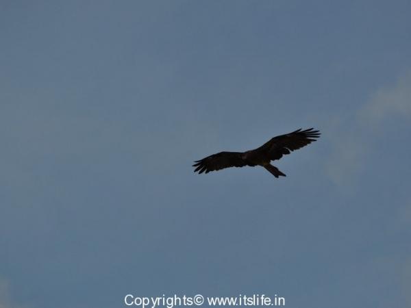 travel-birds-of-marvanthe-2
