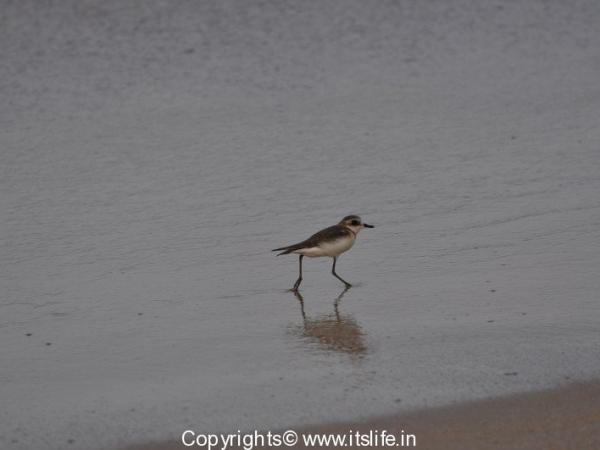travel-birds-of-marvanthe-5