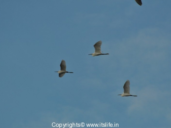 travel-birds-of-marvanthe-6