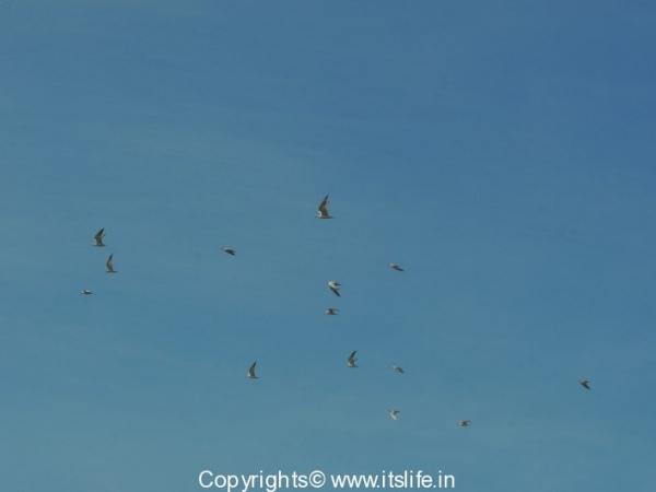 travel-birds-of-marvanthe-9