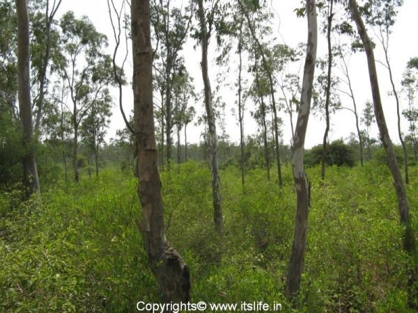 Ranebennur Black buck-sanctuary