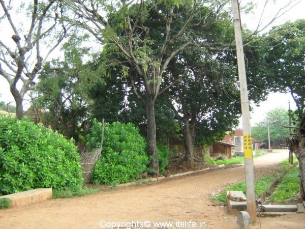 Kokkarebellur Bird Sanctuary