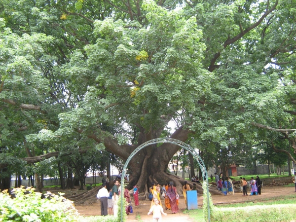 Lalbagh 1