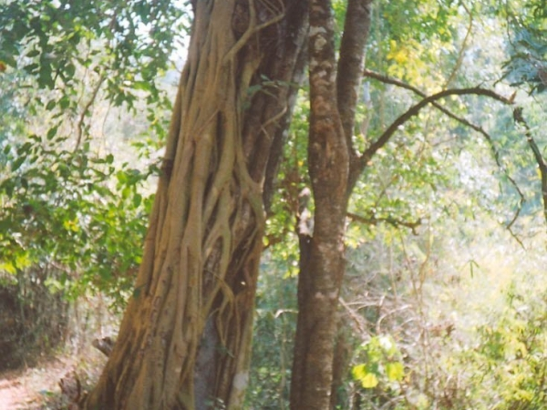 Sathoddi forest