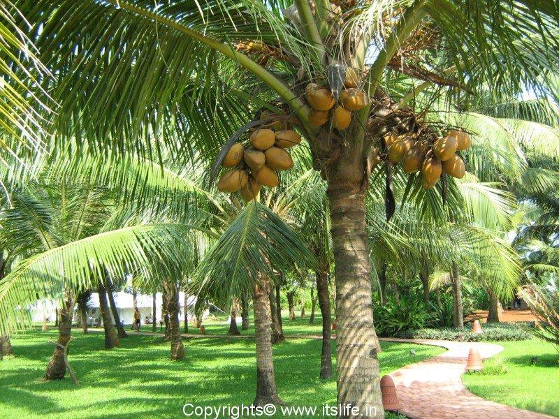 Kerala Tourism | Tourism in Kerala | Places to Visit ...