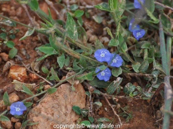 gardening-vishnukranthi-1