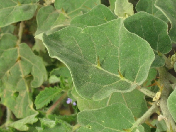weed-brahathi-patram-2