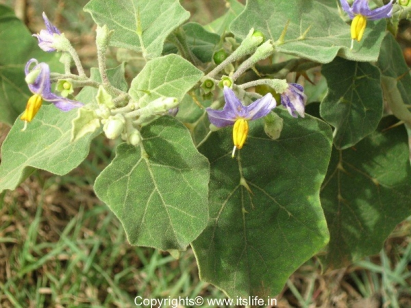 weed-brahathi-patram