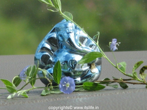 gardening-vishnukranthi-3