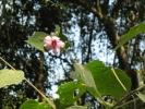 wild-flower-irappu