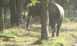 Aane banthondu aane – Here comes an elephant!