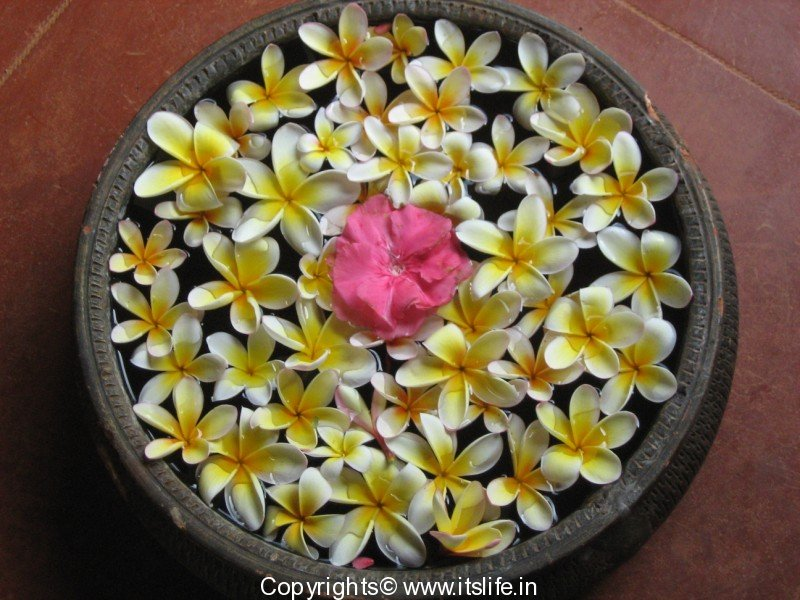 Flower Arrangement Hobbies Floating Arrangement Urali Arrangement