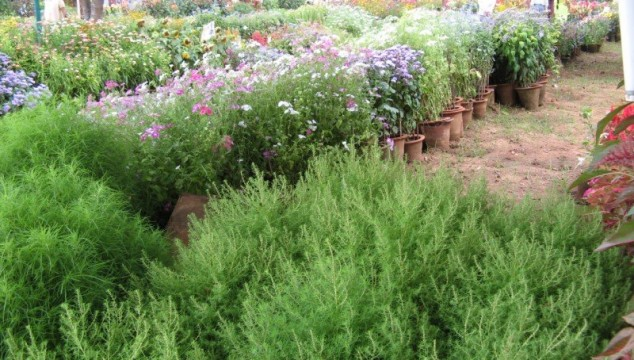 Mysore Dasara Flower Show