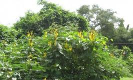 garden-bottle-bush-1