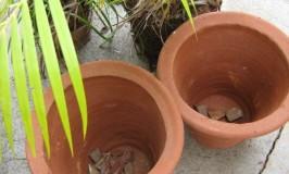 Re-Potting Plants