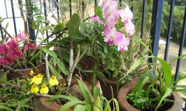 gardening-orchids-balcony