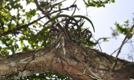 gardening-orchids-nandi