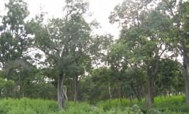 Madumalai