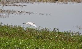 Birds of Puttenahalli Lake
