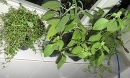 Herbs used in Italian Cuisine