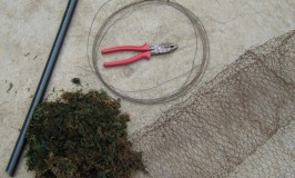 Preparing Moss Grass Stem