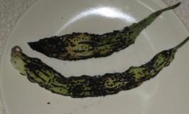 Hagalakayi (Bitter Gourd) Sutta Chutney