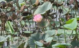 Bheemeshwari Fishing & Nature Camp