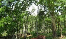 travel-bnp-forest