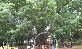 Bangalore – LalBagh